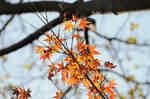 2009_120809年12月紅葉0004.JPG