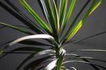 2009_120809年12月紅葉0010.JPG