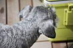 2010_04014月1日ベランダ0007.JPG