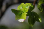 2010_04134月の雨上がり0010.JPG