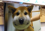 20130912204127.png