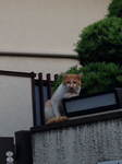 肘つきネコ.JPG